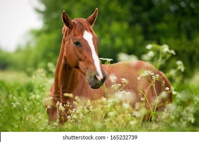 Portrait of red horse on field with flowers