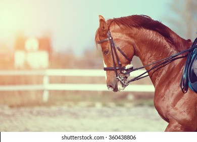 Portrait of a red sports horse on an arena.
