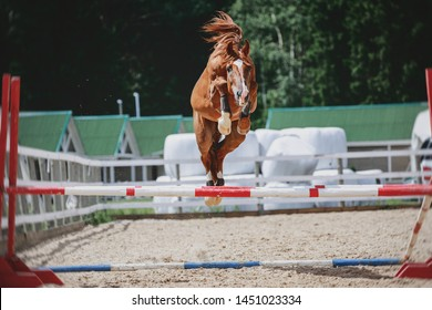 portrait of red trakehner stallion horse jumping