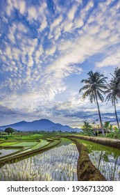 Portrait of reflections of the morning sky and mountains in the rice fields of Bengkulu, Indonesia
