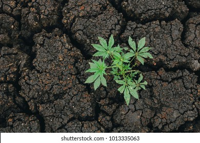 A portrait of resilience, plant born in dry soil