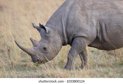 It is portrait of rhino witch shot at close range. It is a good pictures of wildlife. Photos made with short distance and excellent light.