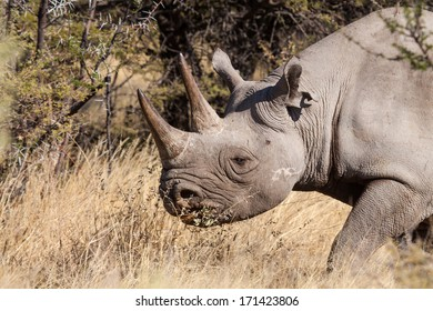 portrait of a rhinoceros in the bush, Etosha, Namibia, Africa