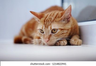 Portrait of a sad red domestic cat with orange eyes.