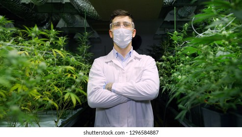 Portrait of scientist with mask, glasses and gloves proud with  his hemp plants in a greenhouse. Concept of herbal alternative medicine, cbd oil, pharmaceptical industry