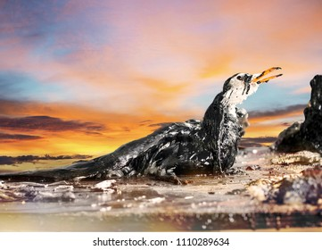 portrait of seagull body on trab of pollution oil in the seashore