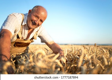 Portrait of senior farmer agronomist in wheat field checking crops before harvest. Successful organic food production and cultivation.