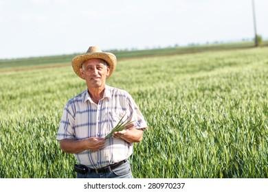 Portrait of senior farmer in a field examining crop