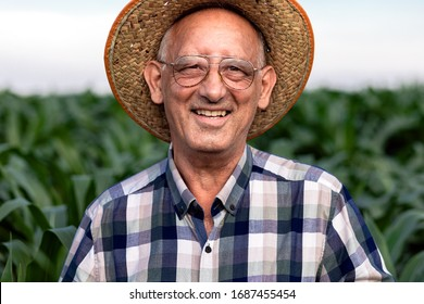 Portrait of senior farmer standing in corn field examining crop.