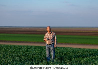 Portrait of senior farmer standing in young wheat field holding mobile phone in his hand and looking at camera.