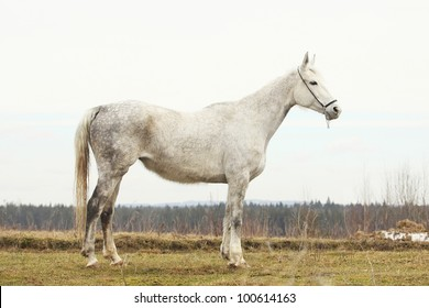 Portrait of a senior hannover mare