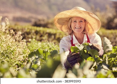 Portrait of a senior woman smiling at the camera wearing a straw hat, and surrounded by the fresh green leaves of many plants in her vegetable garden, with greenery in the background