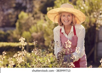 Portrait of a senior woman smiling at the camera while bending over a rocket plant with flowers, while wearing a straw hat and apron in her garden on a sunny morning