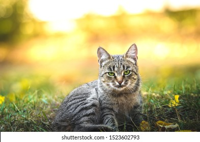 Portrait of a serious cat on a background of autumn