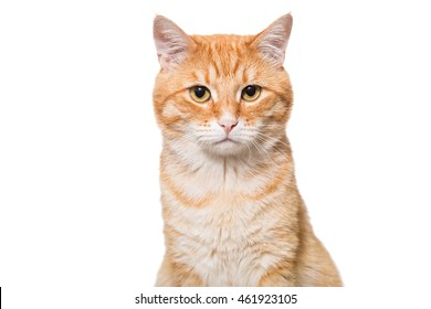 Portrait of a serious orange cat isolated on white