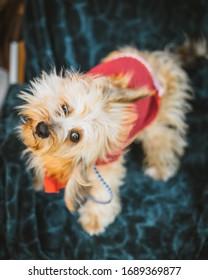 Portrait of a Shelter Dog