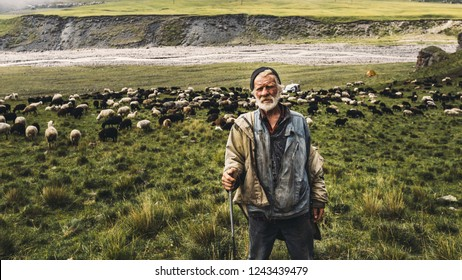 Portrait of shepherd with sheep on a field in the mountains. The concept of modern agriculture and organic products