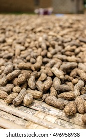 Portrait shot of freshly harvested peanuts drying on a mat in rural Liberia.
