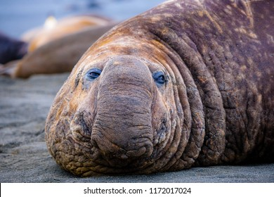 Portrait shots of seals, sea lions and elephant seals in Antarctica