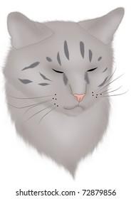 portrait of a sleeping gray cat
