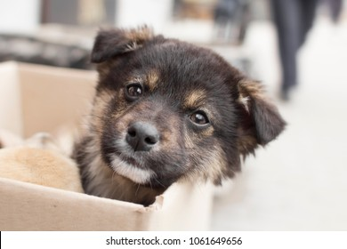 portrait of a small abandoned puppy with sad eyes, a dog in a cardboard box on the street amidst indifferent people, emotions of animals