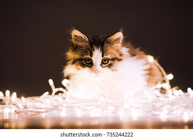 portrait of a small fluffy kitten in the lights of a garland