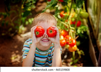 Portrait smiling boy holding red ripe tomatoes before his eyes in the greenhouse