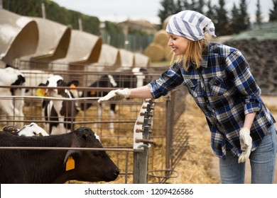 Portrait of smiling Cheerful cowgirl with dairy cattle in farm