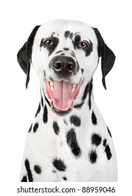 Portrait of a smiling Dalmatian on white background