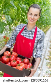 Portrait of smiling farmer carrying tomatoes in crate at greenhouse
