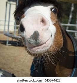 Portrait of smiling horse