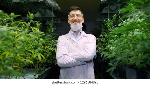 Portrait of smiling scientist with mask, glasses and gloves satisfied with results of analyze of hemp plants in a greenhouse. Concept of herbal alternative medicine, cbd oil, pharmaceutical industry