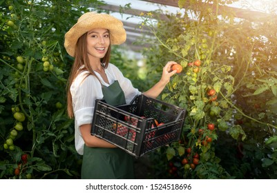 Portrait of smiling villager girl harvesting tomatoes in a hothouse