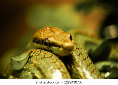 portrait of a snake