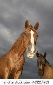 Portrait of sorrel horse and foal on cloudy day