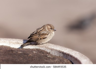 Portrait of a sparrow on a stone curb