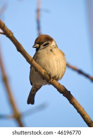 Portrait of a sparrow on a tree branch