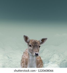 The portrait of spotted fallow deer doe standing outside in the snow