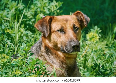 Portrait of Sstreet Dog among the Grass