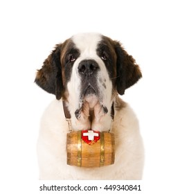 Portrait of a St. Bernard dog with a Swiss barrel against a white background
