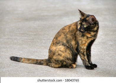 Portrait of a stray cat in Thailand