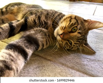 Portrait of a street cat. A brown cat lies on the floor. A beautiful look at the camera of a brown cat. Close-up, horizontal, cropped shot. The concept of domestic animals.