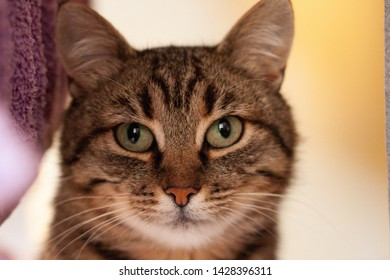 Portrait of a striped cat with a white spot on the face, close look