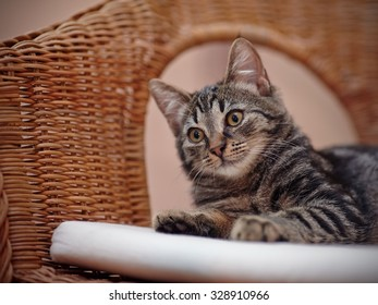 Portrait of a striped kitten with yellow eyes on a wicker chair