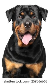 Portrait of a strong Rottweiler on white background