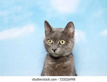 Portrait of a surprised gray kitten looking to viewers left. Blue background sky with clouds.