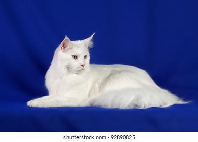 Portrait of sweet pet cat