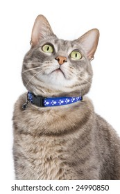 Portrait of a tabby cat against white background