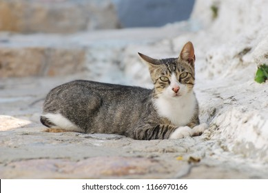 Portrait of a tabby cat with green eyes resting in the streets of Greek town Skyros in the afternoon