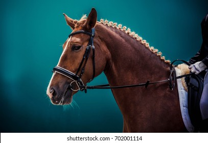 Portrait Of A Thoroughbred Horse On Blur Background Dressage With Beautiful Closeup Equestrian